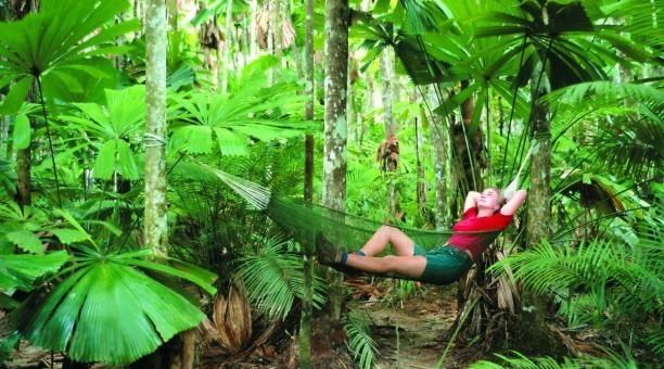 Daintree Rainforest, North Queensland Australia