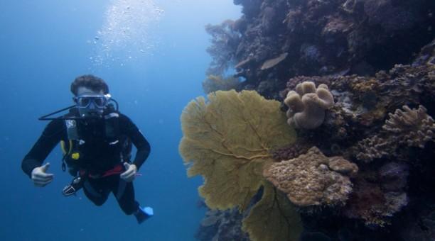 referral dive course