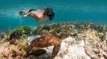 Ningaloo Reef Snorkel Adventure