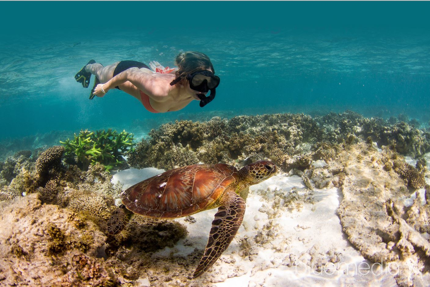 Ningaloo reef snorkel adventure australia dive - Ningaloo reef dive ...