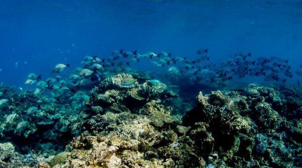 Reef Liveaboard & Rainforest