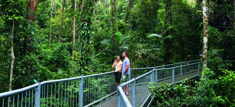 Daintree Rainforest & Daintree Rainforest - Australia-Tours.com.au