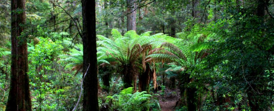 Forests Tasmania, Australia Tours