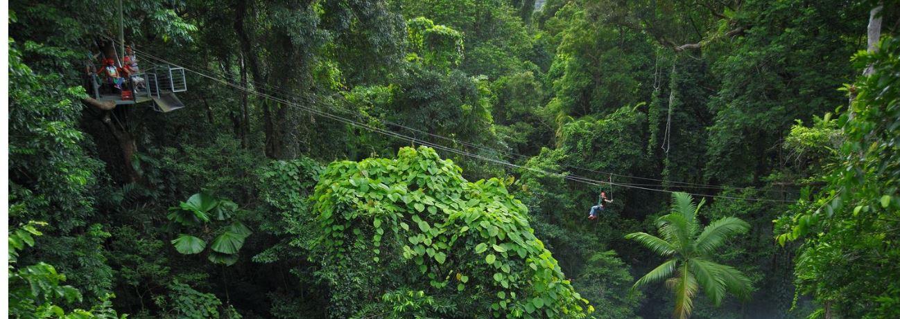 Jungle Swing-Australia Tours