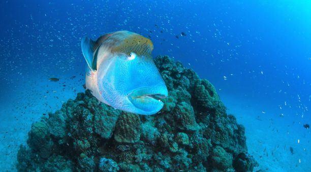 Reef, Rafting and Kuranda