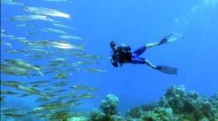 3 Day Scuba Dive Liveaboard Cabin