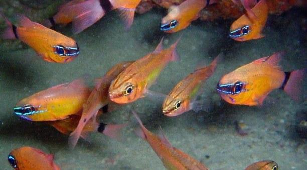 ningaloo-reef-snorkel