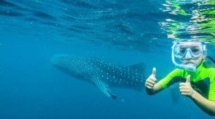 Ningaloo Reef Whale Shark Quest