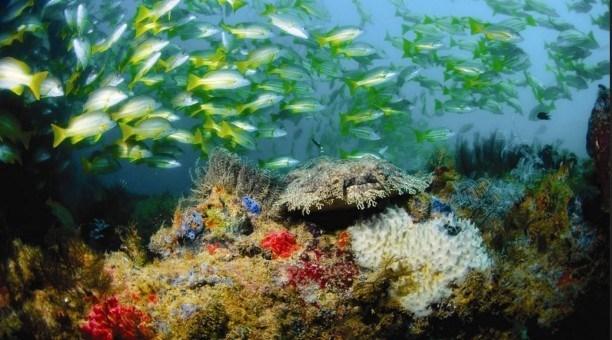 Ningaloo Reef Australia