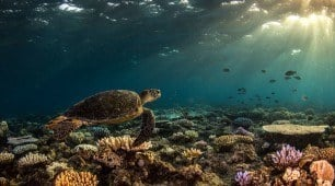 Great Barrier Reef liveaboard