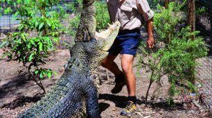 Crocodile Feeding