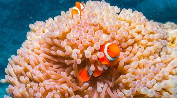 Could you find Nemo?