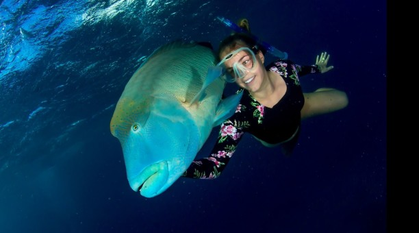 swim with fish on the Great Barrier Reef on an Australia liveaboard