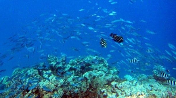 ningaloo-reef-marine