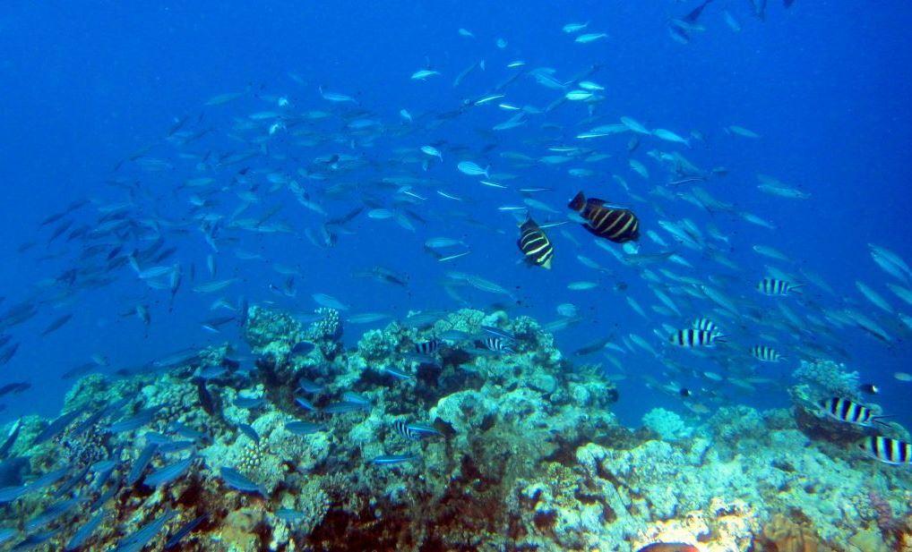 Ningaloo reef snorkel adventure australia liveaboard - Ningaloo reef dive ...