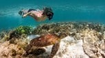 Ningaloo Reef Snorkel Adventure