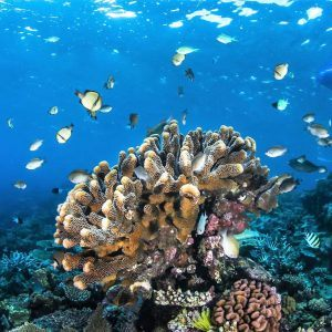 Great Barrier Reef Liveaboard & Kuranda