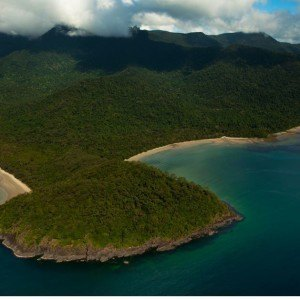 Daintree Rainforest Day Tour