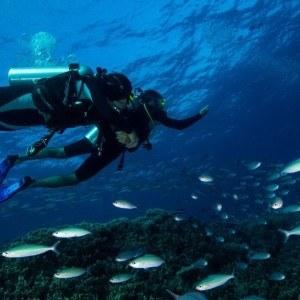 4 Day Resort Dive Liveaboard Cabin