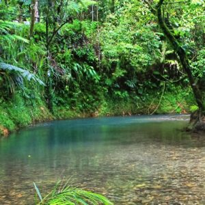 3 Day Reef and Daintree