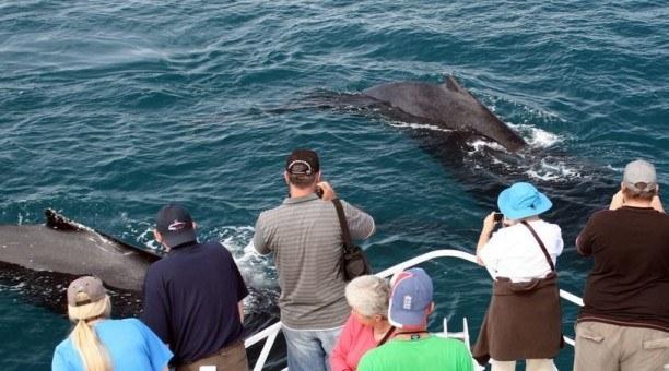 Ningaloo Reef Whale Watch