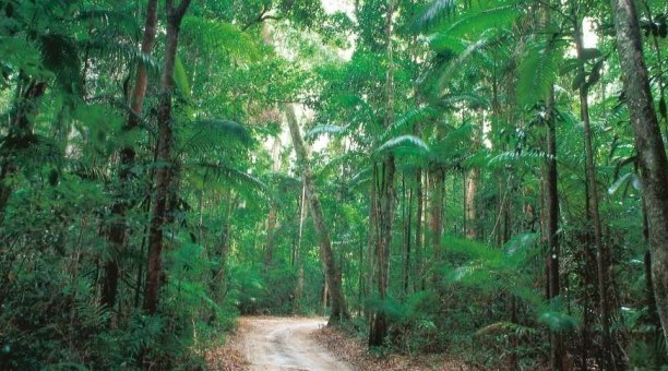 the Rainforests of Fraser Island