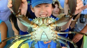 catcha crab tours Cairns Australia