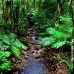 Cape Tribulation and Daintree Rainforest