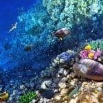 Skydive, Reef and Rainforest
