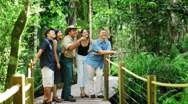 Skyrail Rainforest Guided Tours