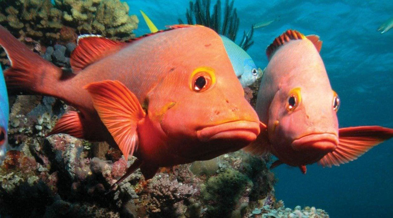 Port douglas reef cairns australia for Great barrier reef fish