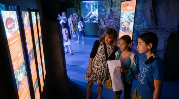 Learning about the Wet Tropics