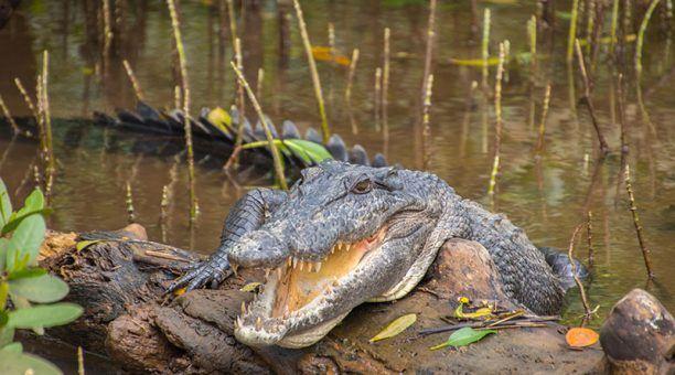 Spot a croc