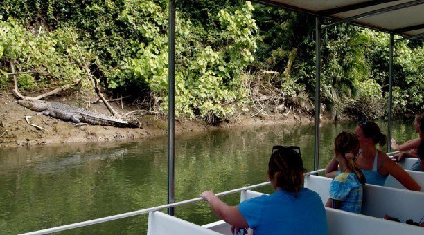 Crocodile Cruise, Daintree River, North Queensland Australia
