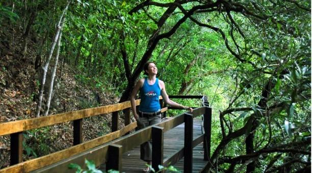 Daintree-Rainforest-Tours