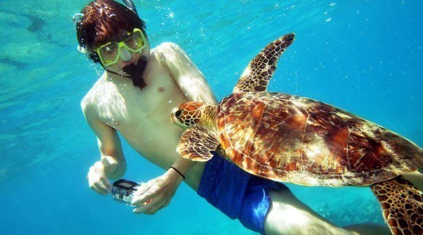 snorkeling, Great Barrier Reef
