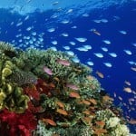 3 day Rafting, Reef and Rainforest