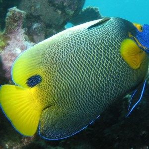 great-barrier-reef-fish - Cairns dive