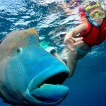 Reef to Rainforest Family Getaway