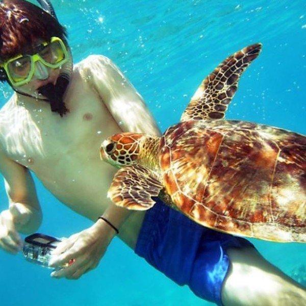 snorkeling, Great Barrier Reef