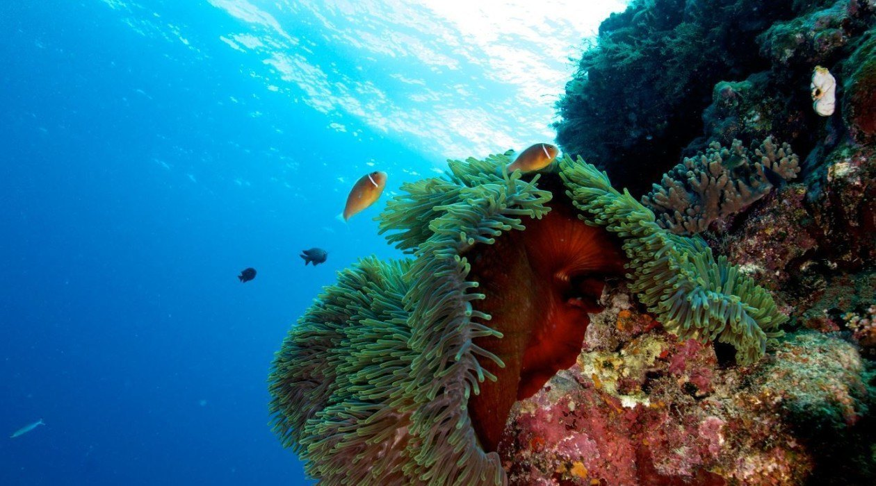 Reef rainforest and paronella park cairns dive for Great barrier reef fish