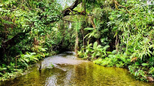 Myall Creek - Daintree Rainforest