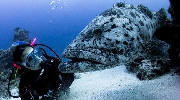 Cod Hole Scuba diving