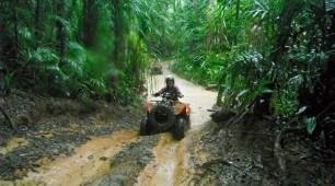 Rainforest tracks