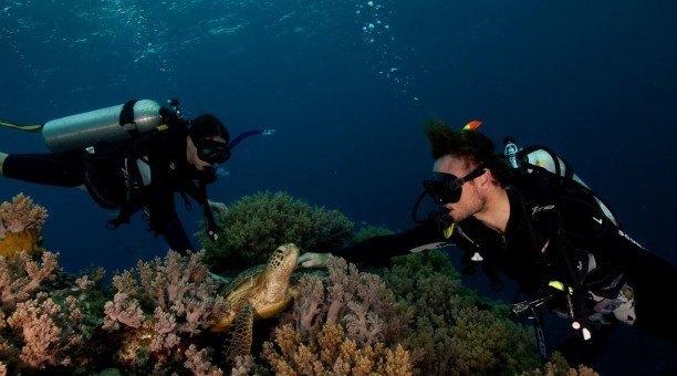 Great Barrier Reef scuba diving, Cairns