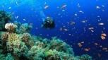 Learn to scuba dive Top Deck Club