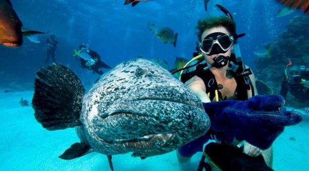 Cod Hole Scuba diving North Queensland Australia
