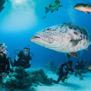 Expedition Tours Australia  Australia has magnificent natural wonders.  Expedition Tours to the Coral Sea, Kimberley, Ningaloo, Great Barrier Reef Expeditions make memories that last forever.  Book Today