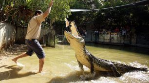 Feed the Crocodile at Hartleys