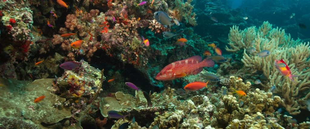 Cairns-coral-reef